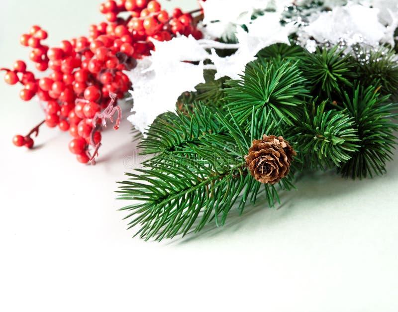 ramos do pinho e baga vermelha imagem de stock royalty free