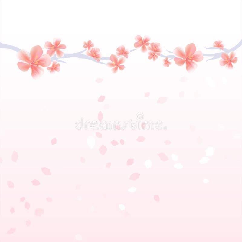 Ramos do voo de Sakura e de pétalas isolado na luz - fundo cor-de-rosa do inclinação flores da Apple-árvore Cherry Blossom Vetor ilustração royalty free