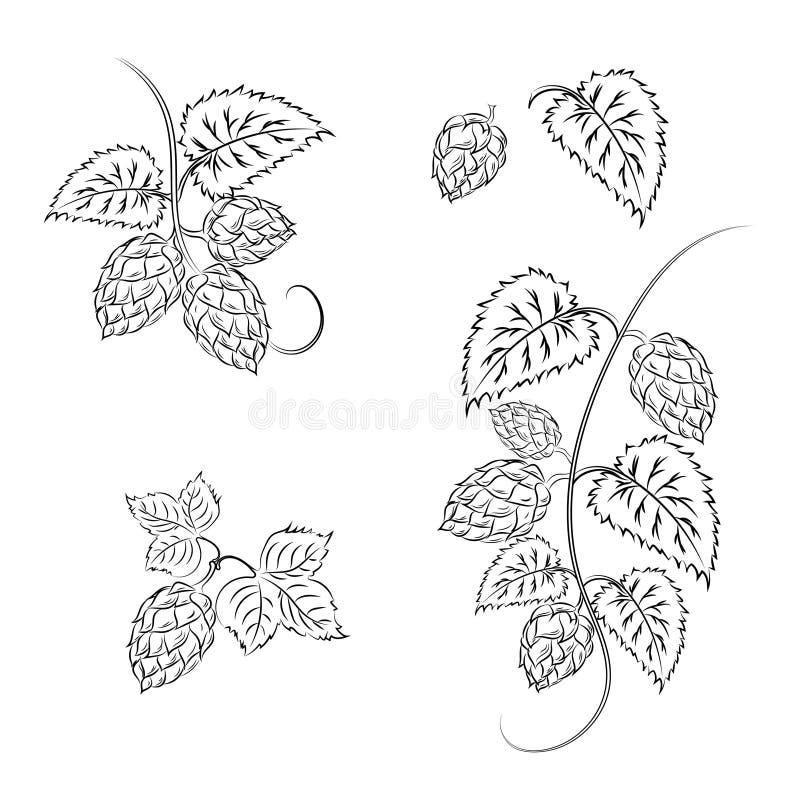Ramos dos lúpulos com cones, isolados em um fundo branco com ilustração stock