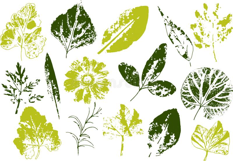 Ramos e folhas do vetor Elementos florais desenhados mão Ilustração botânica monocromática do vintage Selo das folhas pretas ilustração royalty free