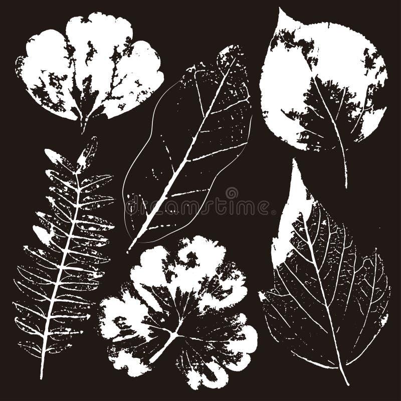 Ramos e folhas do vetor Elementos florais desenhados m?o Ilustra??o bot?nica monocrom?tica do vintage ilustração do vetor
