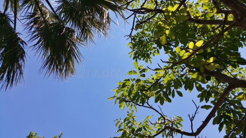 Ramos e folhas no céu azul fotos de stock royalty free