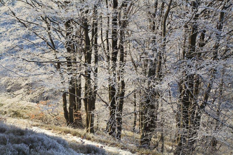 Ramos geados das árvores na floresta do inverno fotos de stock