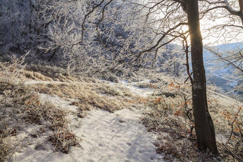 Ramos geados das árvores na floresta do inverno imagens de stock royalty free