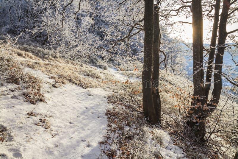 Ramos geados das árvores na floresta do inverno imagens de stock