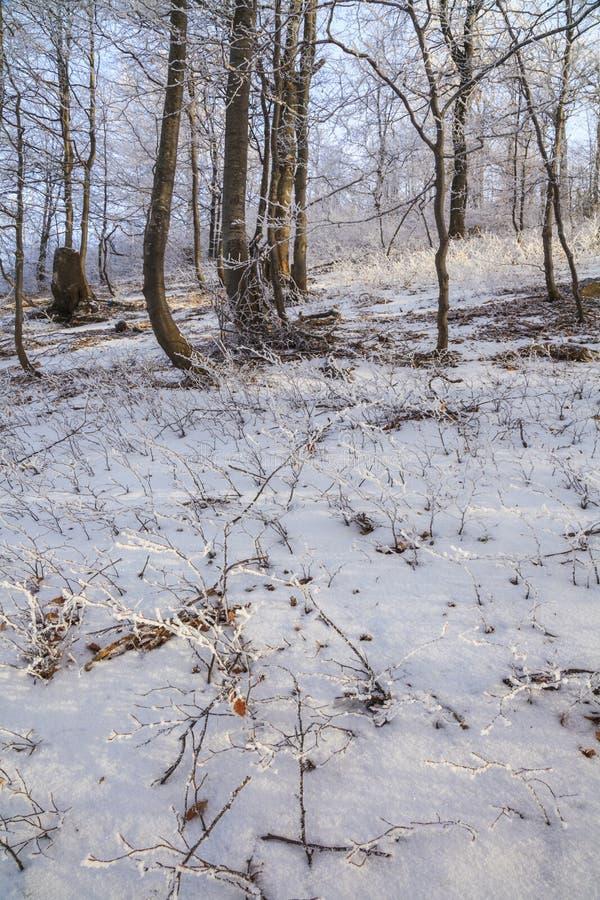 Ramos geados das árvores na floresta do inverno fotografia de stock