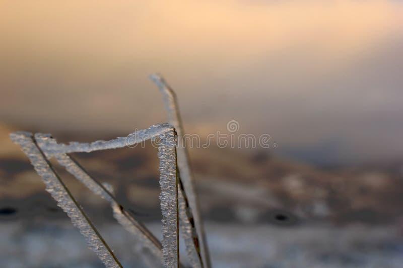 ramos gelados da grama contra uma SK cor-de-rosa-roxa fotos de stock royalty free