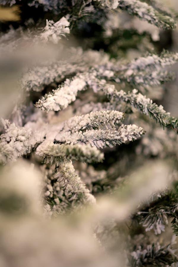 Ramos nevados da árvore de Natal fotos de stock