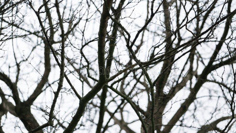 Ramos pretos desencapados austeros no inverno contra um céu nublado branco imagens de stock royalty free