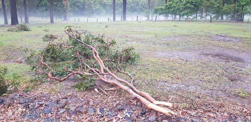 Ramos rasgados das árvores durante uma tempestade foto de stock royalty free