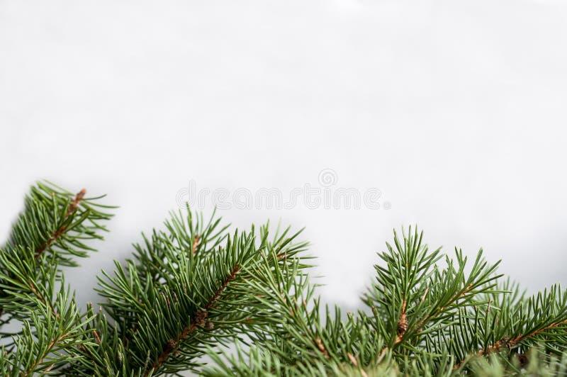 Ramos spruce naturais sem ornamento em um fundo branco fotos de stock royalty free