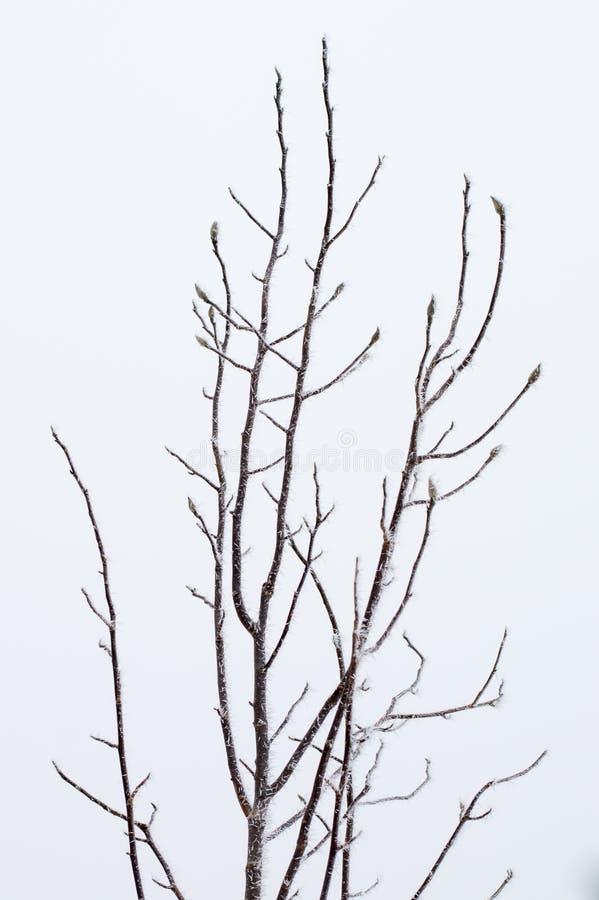 Ramos superiores congelados da árvore imagens de stock royalty free