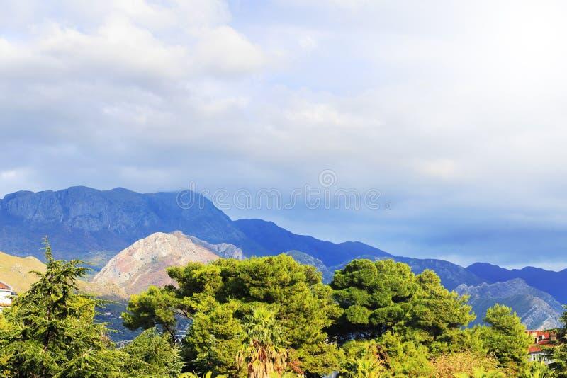 Ramos superiores verdes da árvore fotografia de stock royalty free
