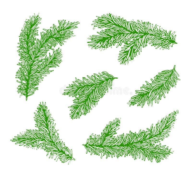 Ramos verdes da coleção de uma árvore de Natal isolada no fundo branco ilustração royalty free