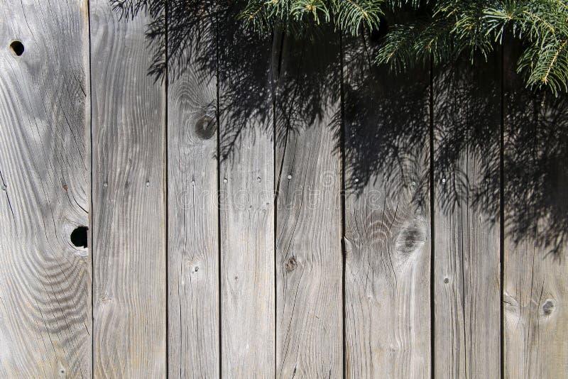 Ramos verdes do abeto e parede de madeira fotografia de stock royalty free