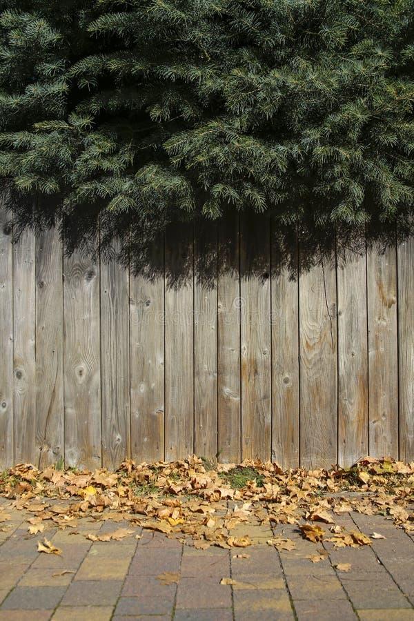 Ramos verdes do abeto e parede de madeira imagens de stock royalty free