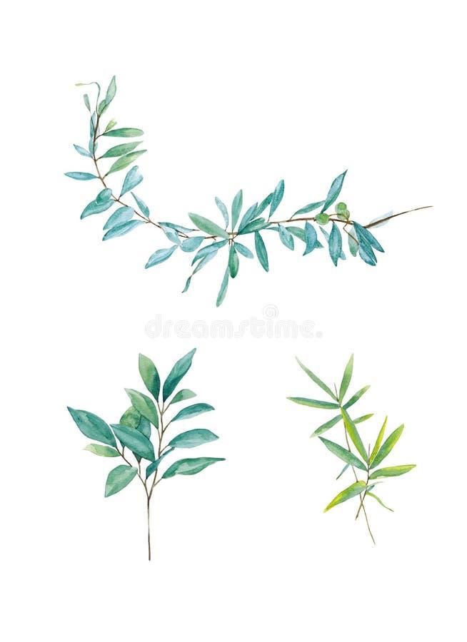 Ramos verdes do salgueiro Folha floral do jardim bot?nico da planta da folha Grupo da ilustra??o do fundo da aquarela Watercolour ilustração do vetor