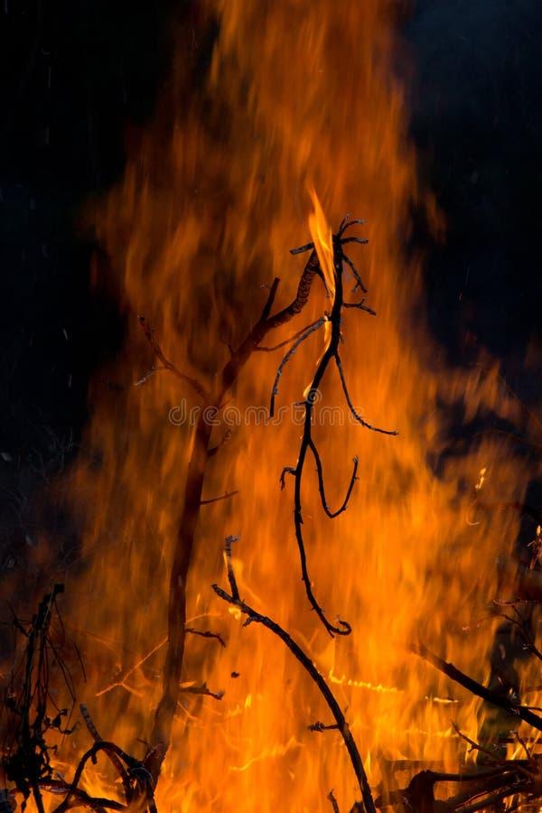 Ramoscelli brucianti profilati contro il contesto fiammeggiare di notte fotografia stock