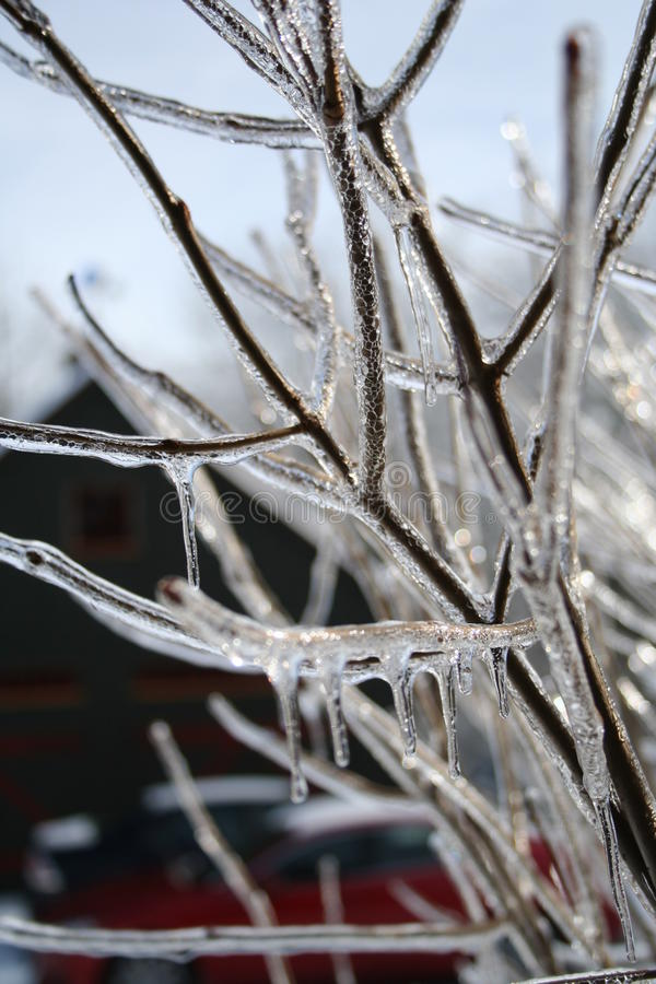Ramoscelli del ghiaccio fotografia stock libera da diritti