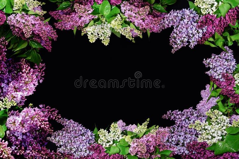 Ramoscelli del lillà dei colori differenti che formano una struttura con uno spazio della copia fotografia stock