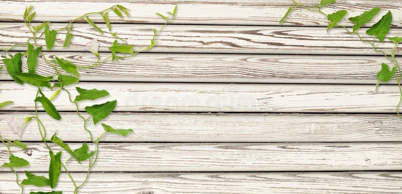 Ramoscelli di legno del convolvolo e della parete con le foglie ed i fiori immagine stock
