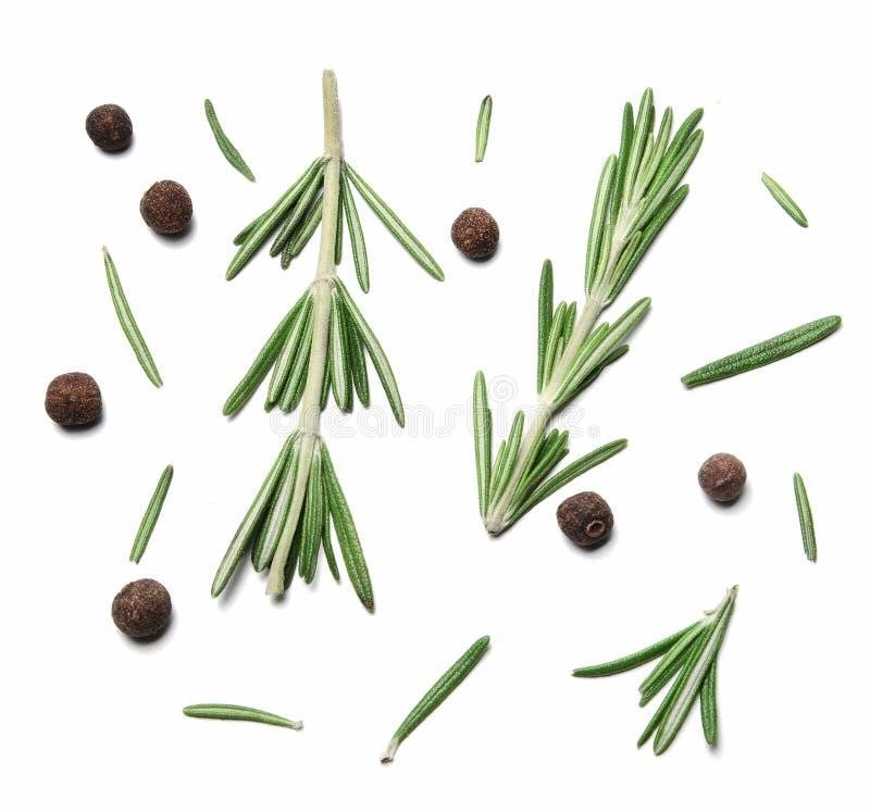 Ramoscelli e foglie dei rosmarini e delle quattro spezie su fondo isolato bianco fotografia stock