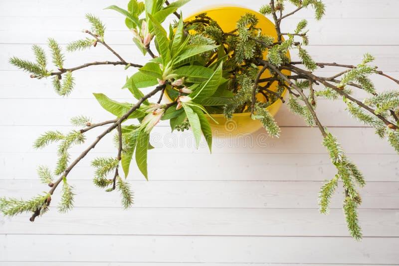 Ramoscelli verdi della ciliegia e del salice in una vista superiore del vaso su una tavola bianca immagini stock libere da diritti