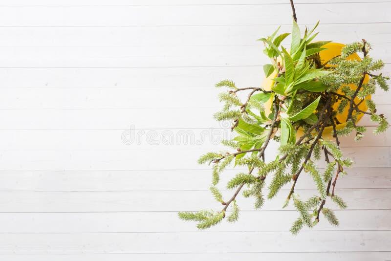 Ramoscelli verdi della ciliegia e del salice in una vista superiore del vaso su una tavola bianca fotografie stock
