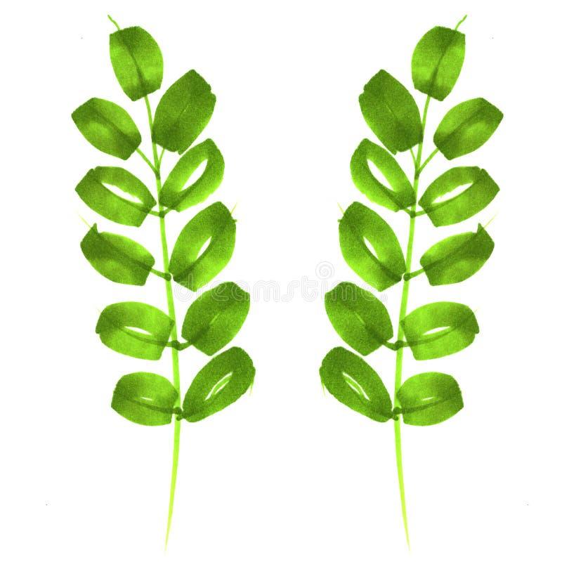 Ramoscello con le foglie estratte dagli indicatori Verde, molla, estate royalty illustrazione gratis