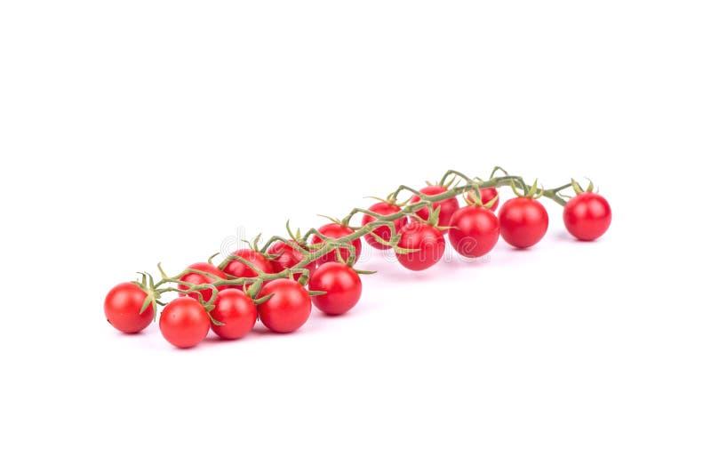 Ramoscello dei pomodori ciliegia immagini stock libere da diritti