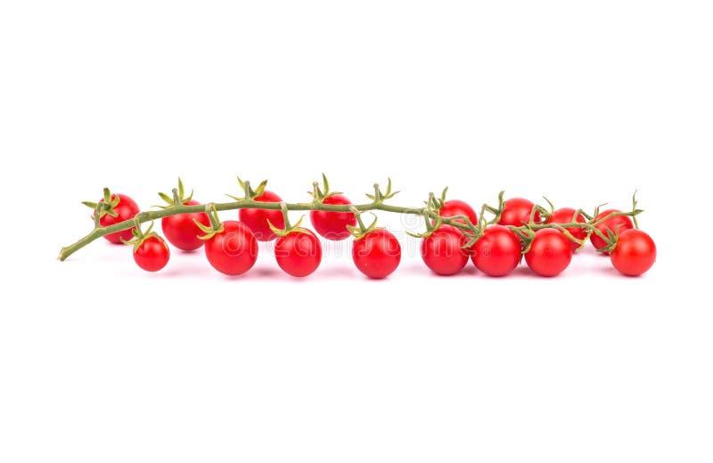 Ramoscello dei pomodori ciliegia immagini stock