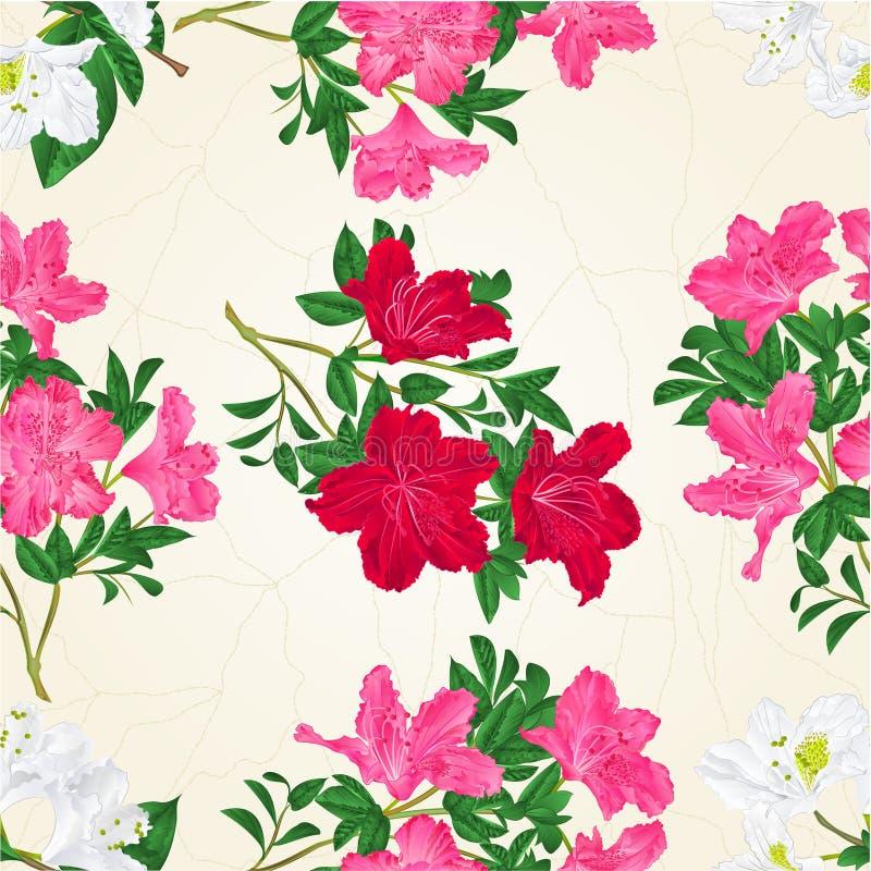 Ramoscello Del Rododendro Dei Fiori Rosa-rosso E Bianchi Di ...
