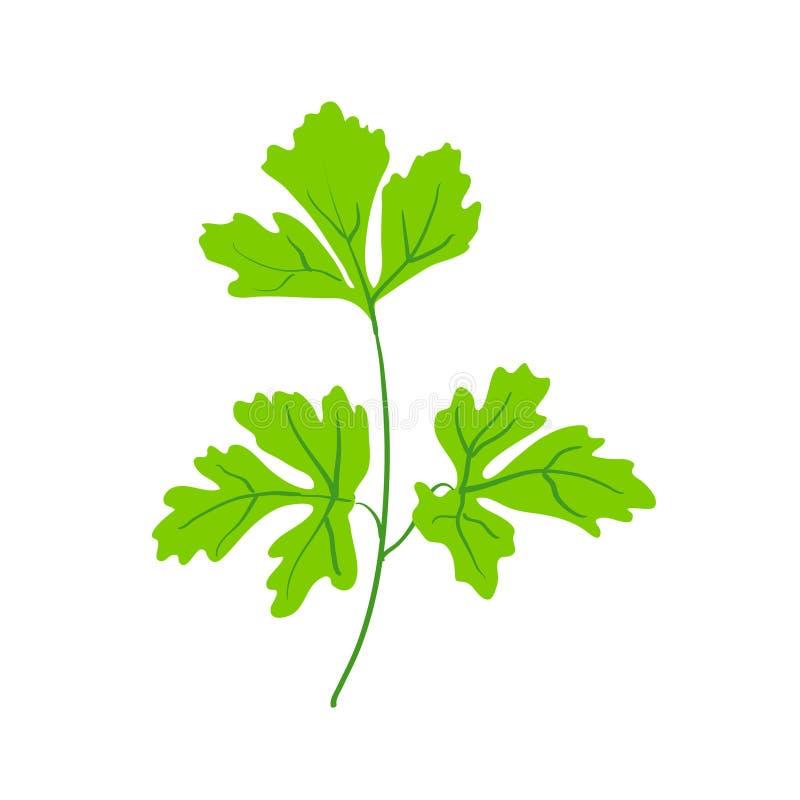 Ramoscello verde di prezzemolo o di coriandolo royalty illustrazione gratis