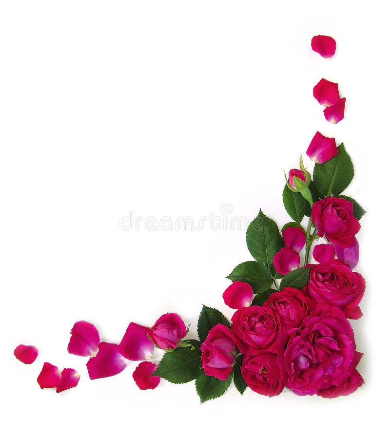 ramowe róże zdjęcia stock
