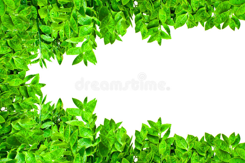 ramowi zieleni liść obraz stock