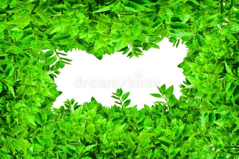ramowi zieleni liść zdjęcia royalty free
