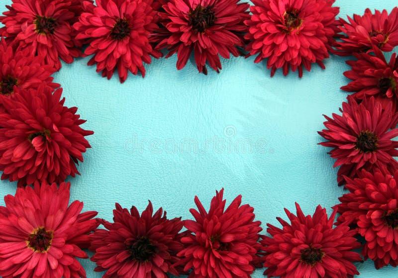 Ramowy projekt chryzantema kwiaty zdjęcia royalty free