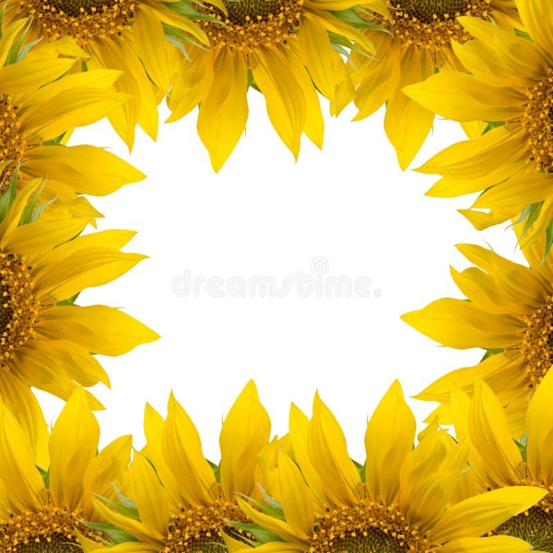 Download Ramowy słonecznik obraz stock. Obraz złożonej z kwiaty - 15585759