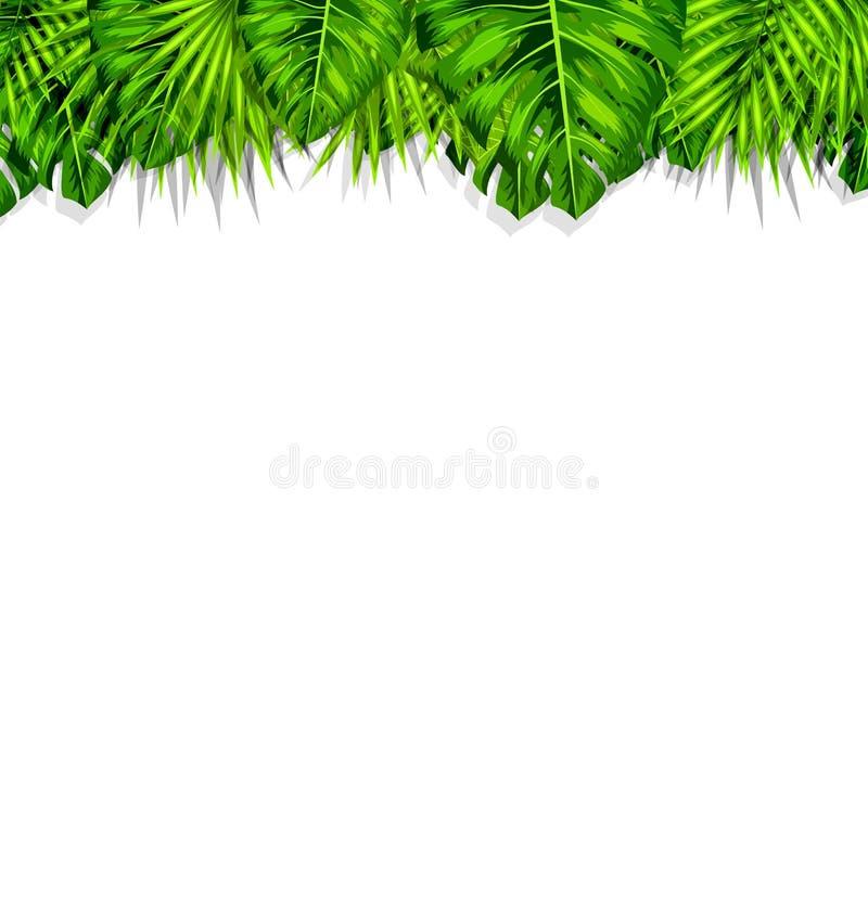 Ramowy Tropikalny liścia lata tło ilustracja wektor