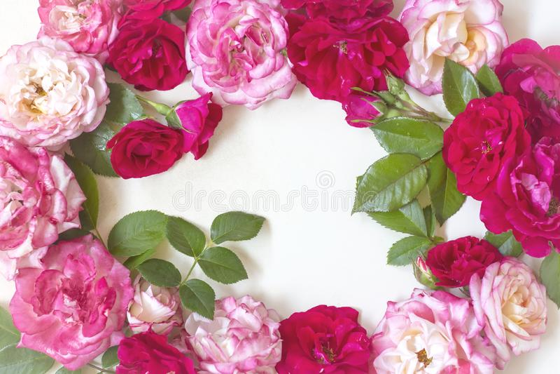 Ramowy wianku wzór z różami, różowymi kwiatów pączkami, gałąź i liśćmi na białym tle, Mieszkanie nieatutowy, odg?rny widok obrazy stock