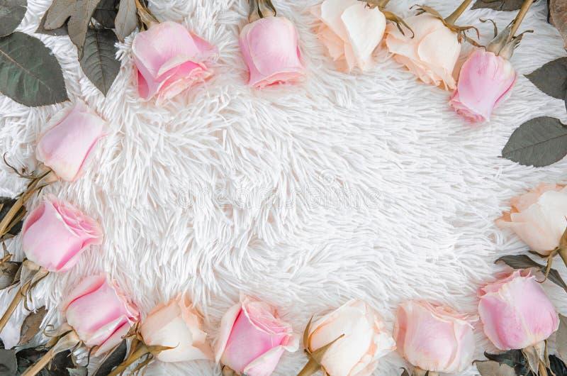 Ramowy wianku wzór z suchymi różami, różowymi kwiatów pączkami, gałąź i liśćmi odizolowywającymi na białym puszystym tle, Mieszka obraz royalty free