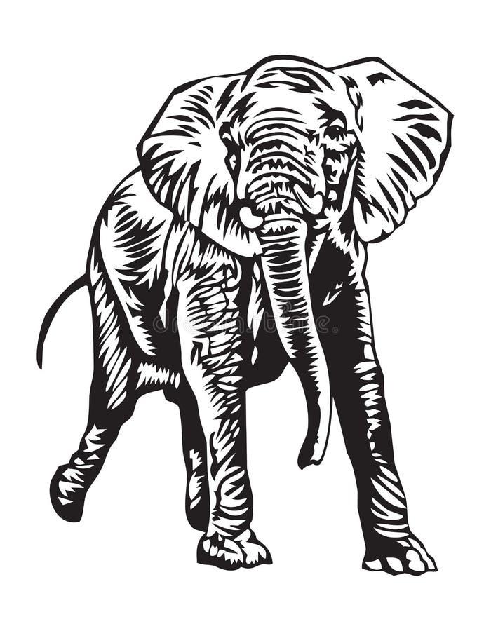 Rampaging elephant stock photos
