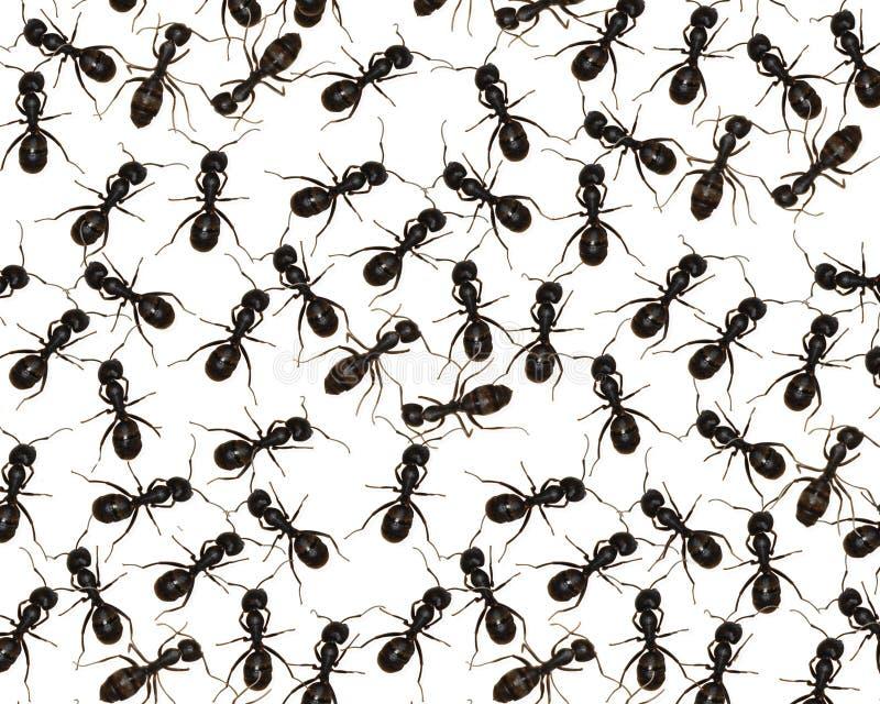 Rampement avec des fourmis photographie stock libre de droits