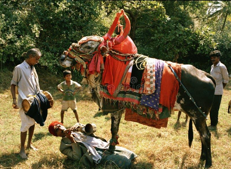 Ramprakesh Goa India i jego dancingowy byka Shapora gypsy obóz fotografia stock