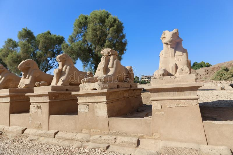 Rams at Karnak Temple - Egypt. Architecture of Karnak Temple at Luxor - Egypt Karnak temple - Most huge temple at Egypt stock images