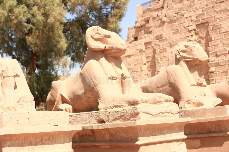 Rams at Karnak Temple - Egypt. Karnak Temple at Luxor - Egypt Karnak temple - Most huge temple at Egypt royalty free stock photo