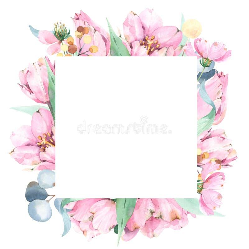 Ramsammansättning med handen målade vattenfärgvårtulpan, lösa blommor, lövverk stock illustrationer