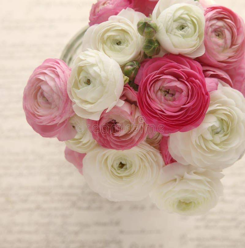 Ranúnculo cor-de-rosa e branco com certificado foto de stock