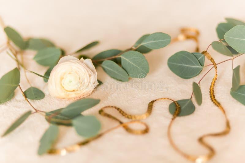 Ranúnculo da flor com eucalipto foto de stock royalty free