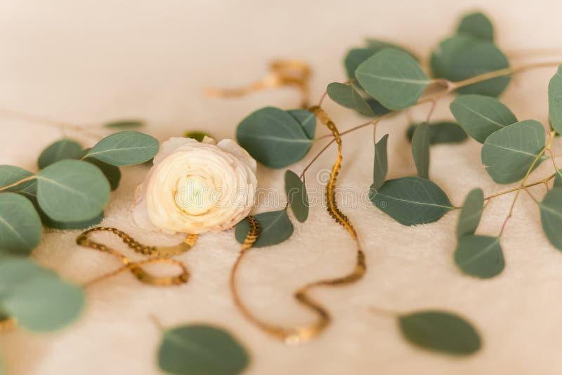 Ranúnculo da flor com eucalipto imagens de stock royalty free